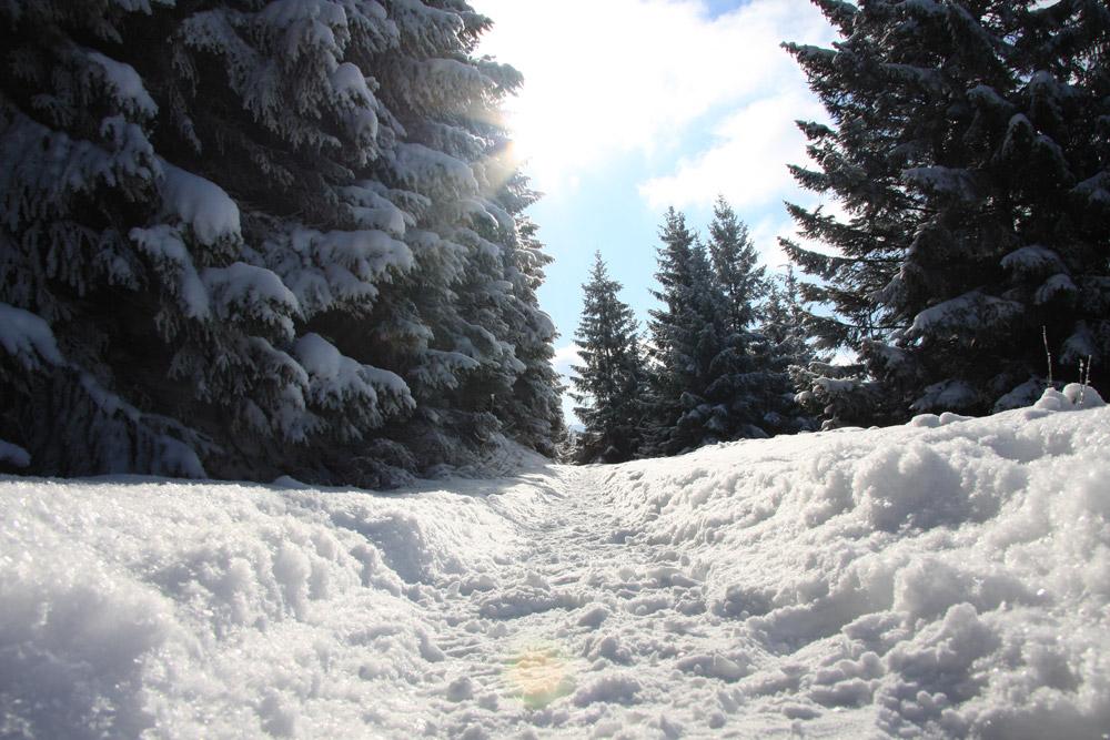 Scheeweg im Harz Winterlandschaft